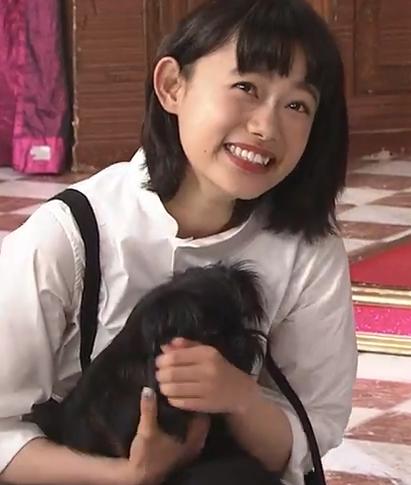 杉咲花,しゃべくり007,犬,グリフォン